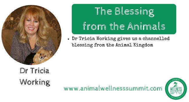 3rd Online Animal Wellness Summit Nov  7th - 6th, 2019